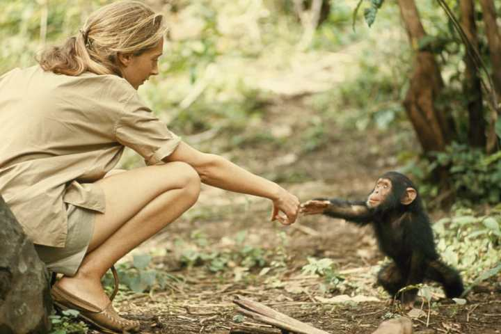 lady-monkey
